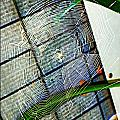 Charlotte's Web by Meagan Hoelzer