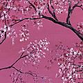Cherry Blossoms  by Darice Machel McGuire