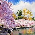Cherry Blossoms by Shirley Braithwaite Hunt
