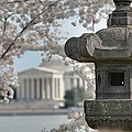 Cherry Blossoms with Jefferson Memorial - Washington DC - 011323 Print by DC Photographer