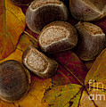 Chestnuts and Fall Leaves