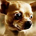 Chihuahua Dog - Electric by Wingsdomain Art and Photography