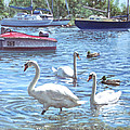 Christchurch Harbour Swans And Boats by Martin Davey
