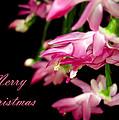 Christmas Cactus Greeting Card by Carolyn Marshall