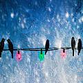 Christmas Lights by Bob Orsillo