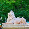 Clean Lion