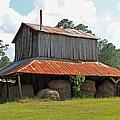 Clewis Family Tobacco Barn by Suzanne Gaff