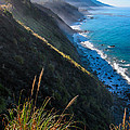 Cliff Grass At Big Sur by Adam Pender