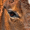 Close Up Of A Horse Eye by Paul Ward