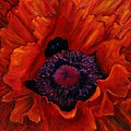 Close Up Poppy by Billie Colson