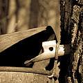 Closeup Of A Maple Tap by Edward Fielding