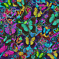 Cloured Butterfly Explosion by Alixandra Mullins