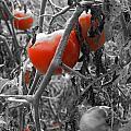 Color Pop Tomato