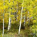 Colorado Autumn by Baywest Imaging