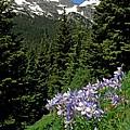 Colorado Classic by George Tuffy