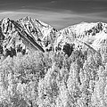 Colorado Rocky Mountain Autumn Magic Black And White by James BO  Insogna