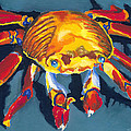 Colorful Crab by Stephen Anderson