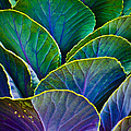 Colors Of The Cabbage Patch by Christi Kraft