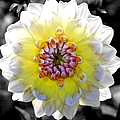 Colorwheel by Karen Wiles
