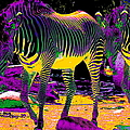 Colourful Zebras  by Aidan Moran