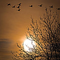 Coming Home In The Spring by Bob Orsillo