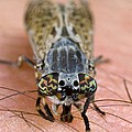 Common Horse Fly by Science Photo Library