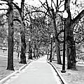 Commons Park Pathway by Scott Pellegrin