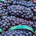 Concord Grapes by Mary  Smyth