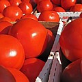 Cool Tomatoes by Barbara McDevitt