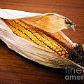 Corn Ear by Sinisa Botas