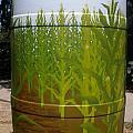 Corn Field by Katherine Tesch