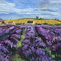 Cotswold Lavender Fi...