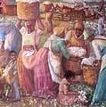Cotton Fields by Pamela Mccabe