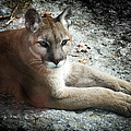 Cougar Country by Karen Wiles