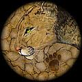 Cougar by Ethan  Foxx