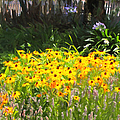 Countryside Cottage Garden 5d24560 Long by Wingsdomain Art and Photography