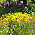 Countryside Cottage Garden 5d24560 by Wingsdomain Art and Photography
