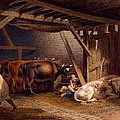 Cow Shed by Robert Hills