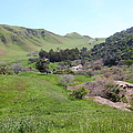 Cows Along The Rolling Hills Landscape Of The Black Diamond Mines In Antioch California 5d22294 by Wingsdomain Art and Photography