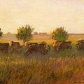 Cows1 by J Reifsnyder