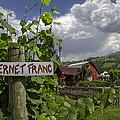 Crane Creek Vineyard by Debra and Dave Vanderlaan