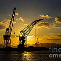 Cranes In The Sunset by David Hill