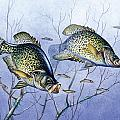 Crappie Brush Pile by JQ Licensing