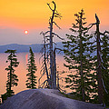 Crater Lake Trees by Inge Johnsson