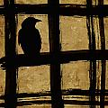Crow And Golden Light Number 1 by Carol Leigh