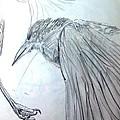 Crow Pencil Study