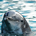 Curious Dolphin by Mariola Bitner