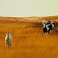 Curious Ponys  by Jeff Swan