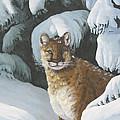 Curious Watcher - Cougar