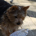 Cutest Dog Ever - Animal - 011311 by DC Photographer